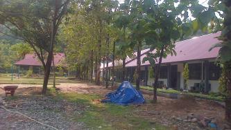Pohon Jati Sebagai Pohon Pelindung di Sekolah Kami
